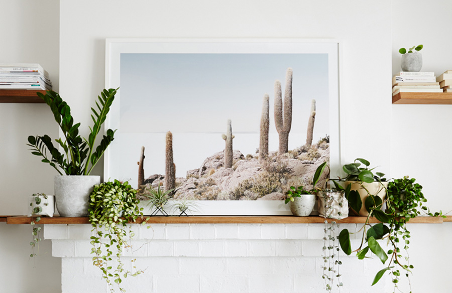 Using indoor plants as a design feature   in your home