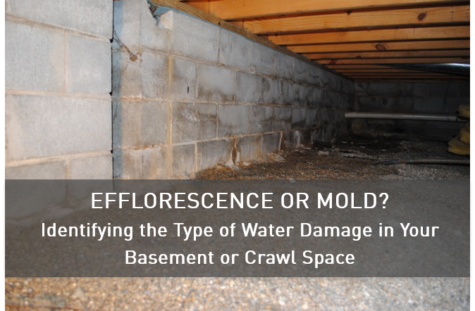 Efflorescence or Mold? Water Damage in Basements or Crawl Spac