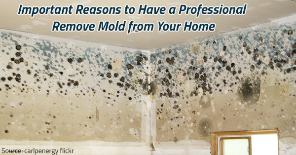 Important Reasons for Professional Mold Remov