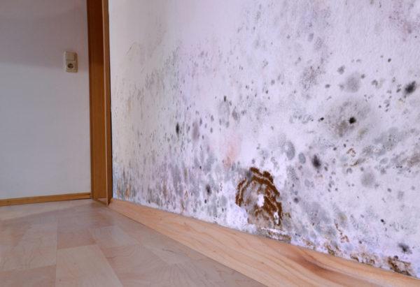 Mold Remediation | Home Perfect Restorati