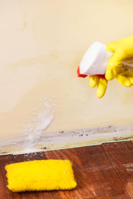 Does DIY Mold Remediation Work?