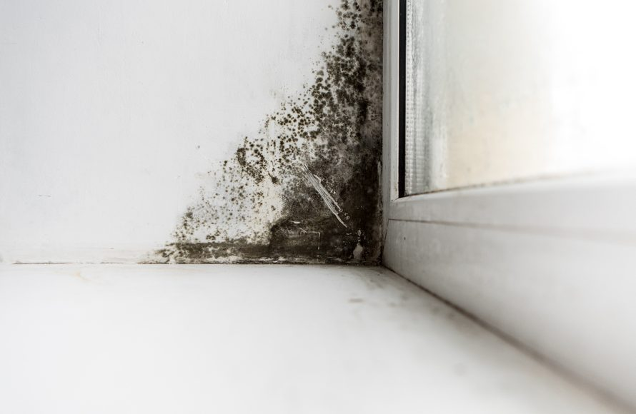 Why do you have to test for mold in your   home?